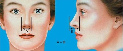 استاندارد های بینی